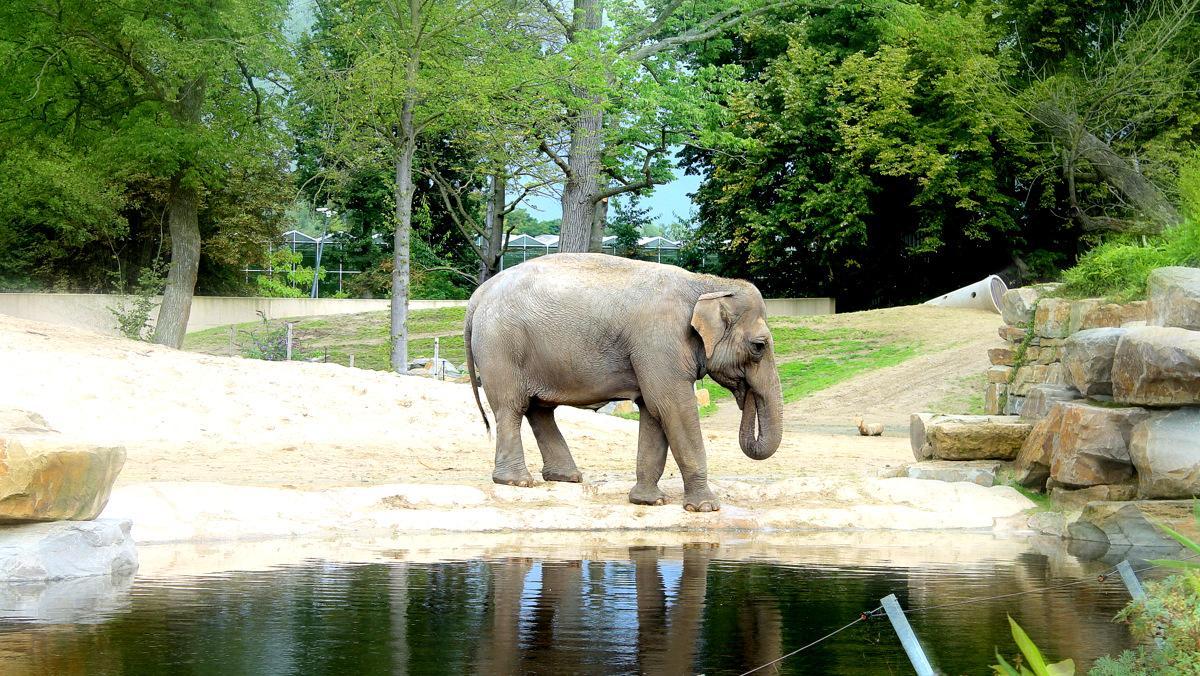 Misschien Kai Mook. Misschien een andere olifant. Wie weet!