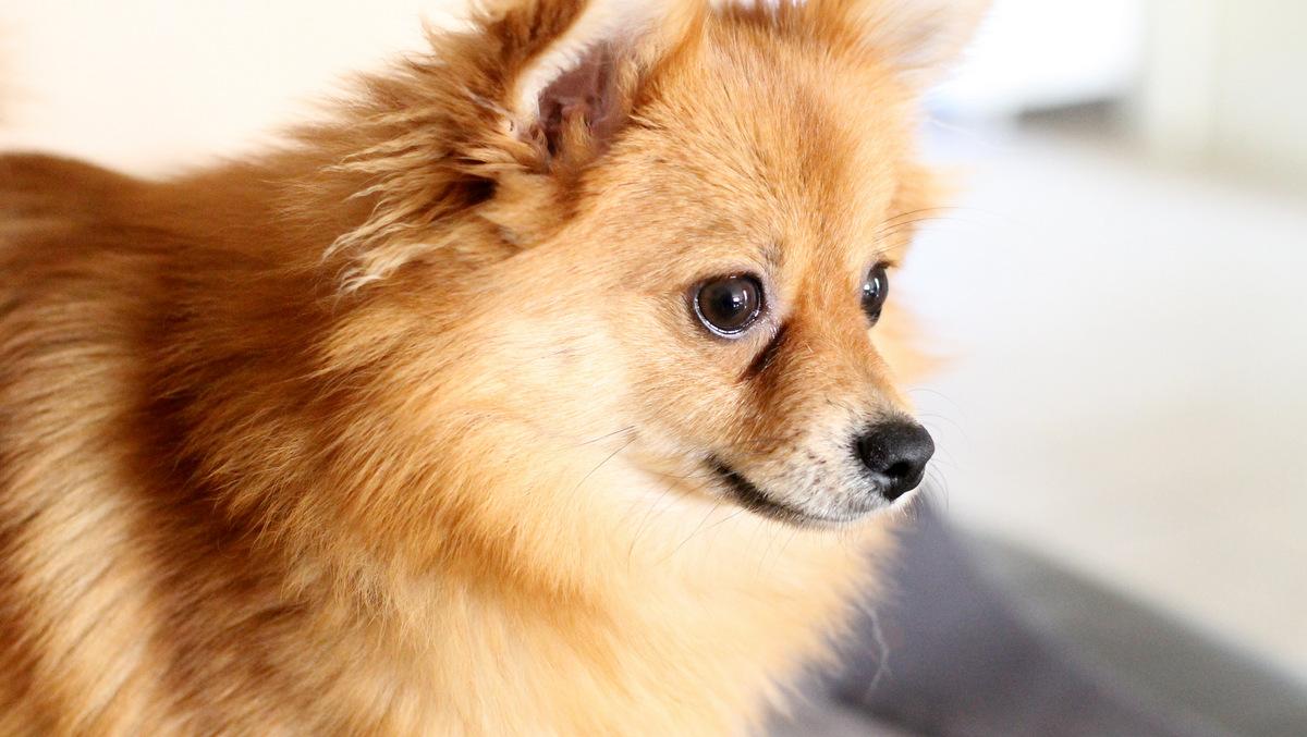 Aangezien de puppy niet wou poseren in nieuwe tenue (ze zit in haar puberteit), gewoon een foto van de puppy